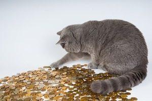 仮想通貨主要5通貨の最適な仕込み時
